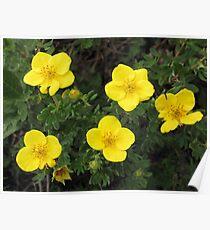 Burren Flowers Poster
