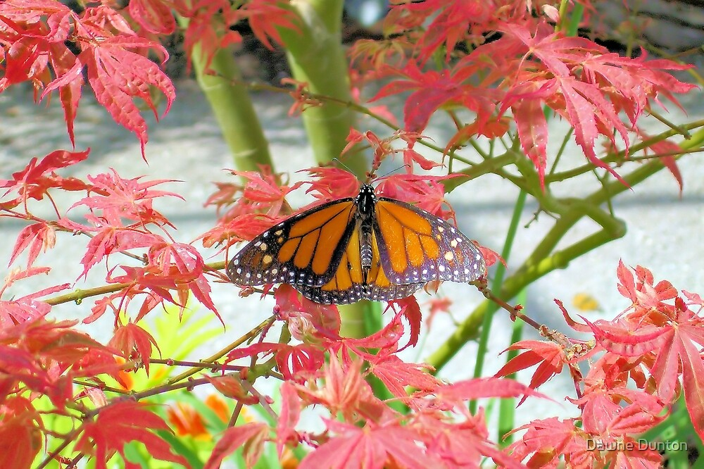 Monarch Among The Red Leaves by ©Dawne M. Dunton