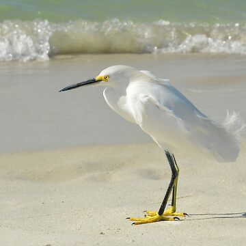 Snowy Egret on Beach by Lucindawind