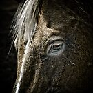 Horse's Eye by Christopher R. Watts