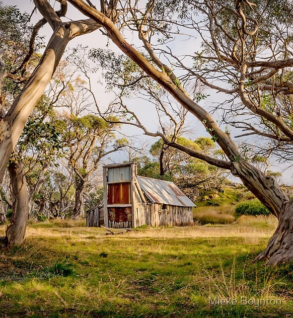 Wallace's Hut by Mieke Boynton