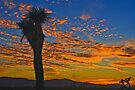 Joshua Tree Silohette Sunset by photosbyflood