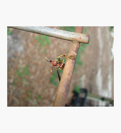 Wasp with Prey Photographic Print