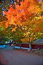Snowline Apple Orchard by photosbyflood