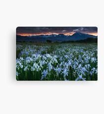 Wild Iris and Sierra Sunset Canvas Print