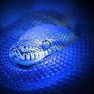 Electric Blue by Leanne Allen