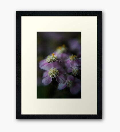 Today I am beauty  (from wild flowers collection) Framed Print