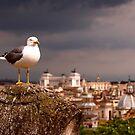 A Birds Eye View by John Wallace