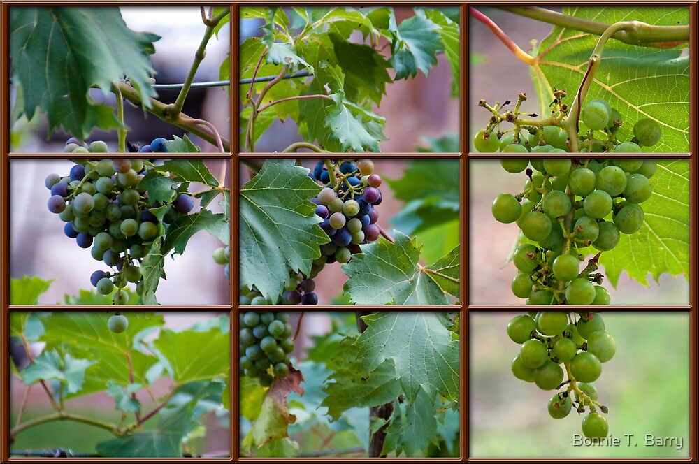 View of the Vineyard by Bonnie T.  Barry