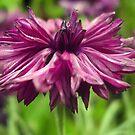 Purple Dreems by tonymm6491