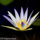 Pond Beauty by Stephen Dean