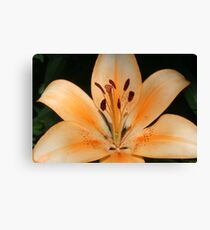 Summer Lilly Canvas Print