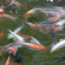Koi Abstract by Leroy Laverman