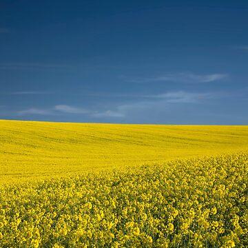 Fields of Gold by chuckirina