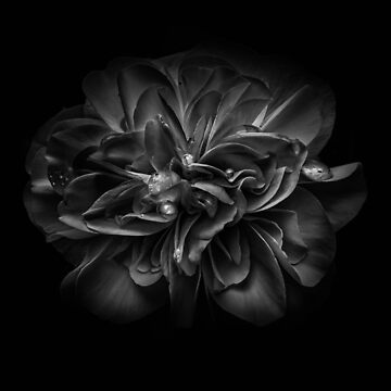 Backyard Flowers In Black And White 67 by learningcurveca
