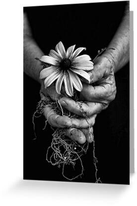 Elder Roots by Jason  Burris