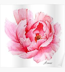 Pink Watercolour Peony Poster