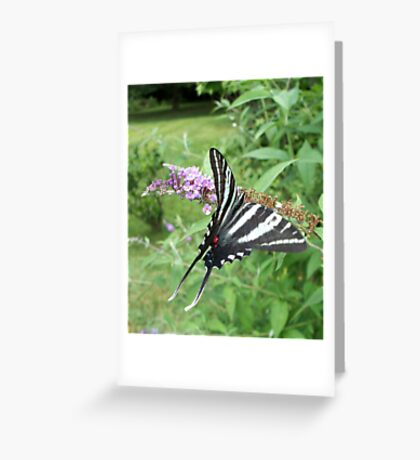 Great Tail Greeting Card