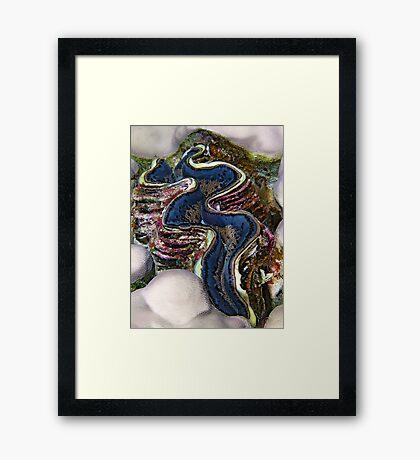 Giant Clam Framed Print