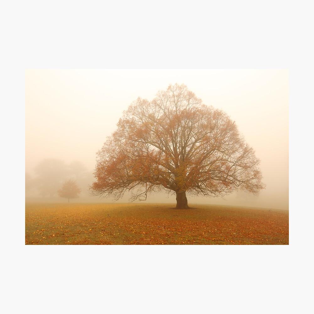 Autumn Fog, Daylesford, Australia Photographic Print