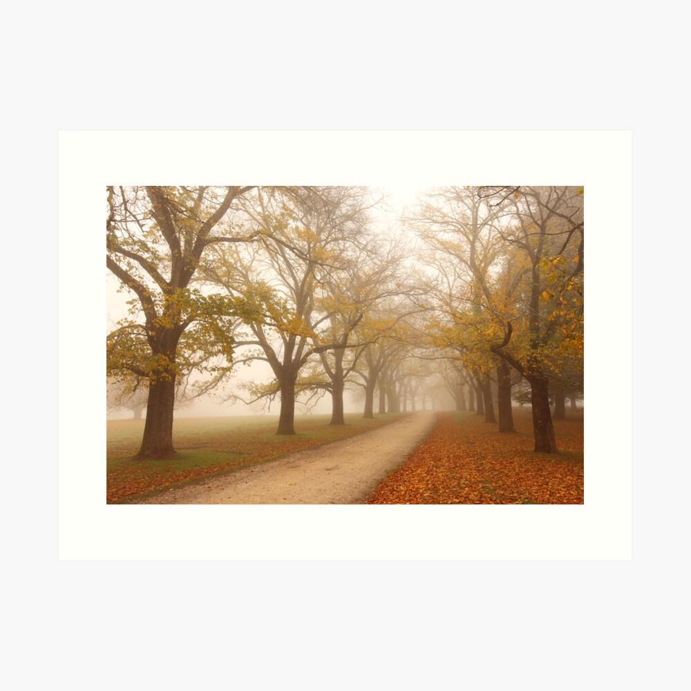 Autumn Fog, Daylesford, Victoria, Australia Art Print