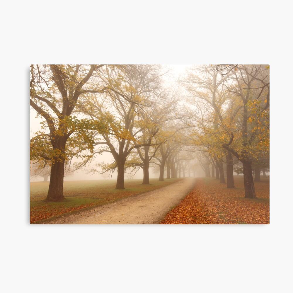 Autumn Fog, Daylesford, Victoria, Australia Metal Print