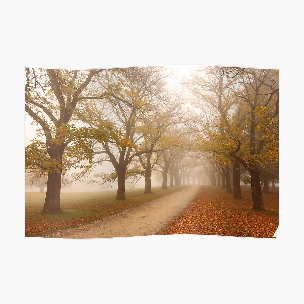 Autumn Fog, Daylesford, Victoria, Australia Poster