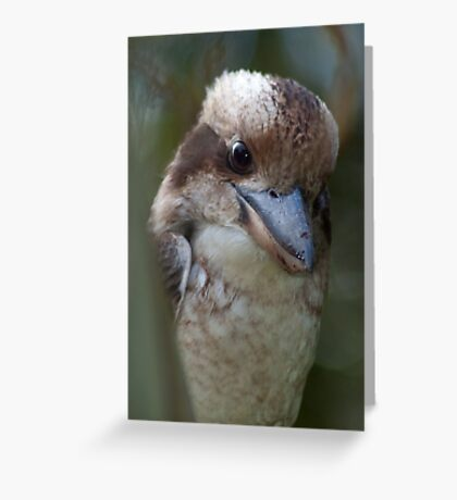 Kookabara Greeting Card