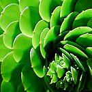 Swirls by Julie Moore