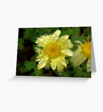 Bejewelled Daisy Greeting Card