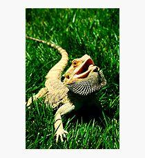 Modern Dragon Photographic Print