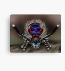 Peacock Spider Canvas Print