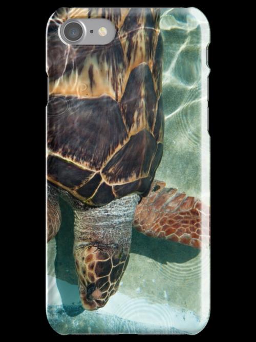 Turtle by Jaime Pharr