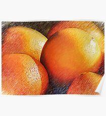 Oranges In Pencil Poster