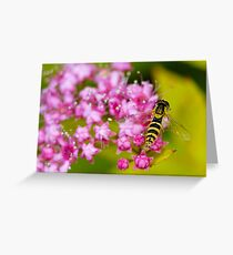 bee over a flower Greeting Card