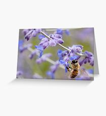 bee and flowers Greeting Card