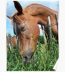 Yummy Grass Poster
