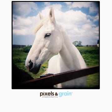 Holga White Horse by meganyoungphoto