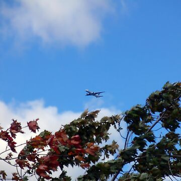 As the season flies by ('Leaf'ing below a jet plane) by m48teh
