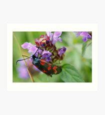 Burnet Moth Art Print