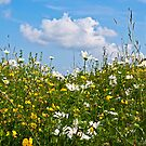 Summer meadow by Frevik
