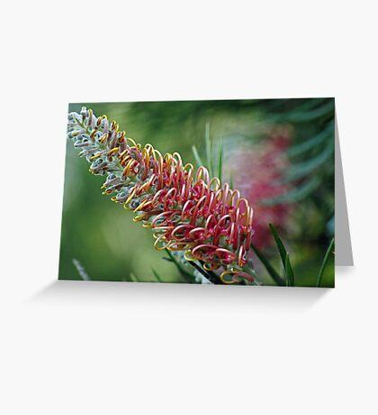 pink grevillea Greeting Card