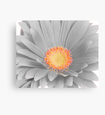 Lienzo Gerbera Daisy with Yellow Center