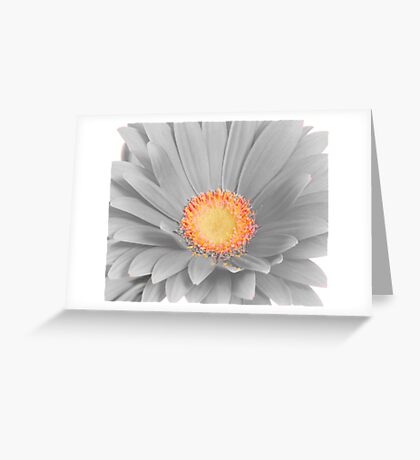 Gerbera Daisy with Yellow Center Greeting Card