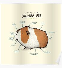 Anatomy of a Guinea Pig Poster