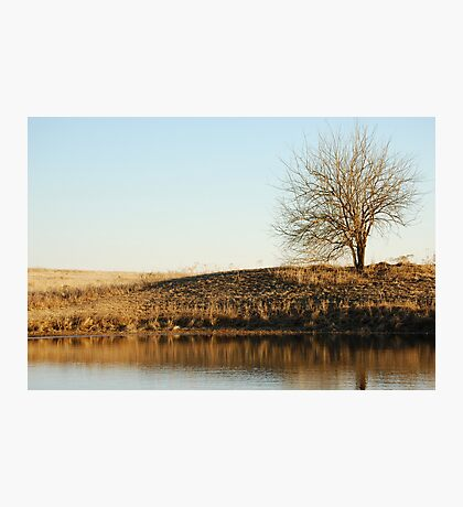 Lone Tree by Pond in Autumn Photographic Print