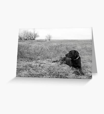 Labrador in Field Greeting Card