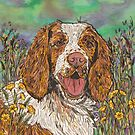 Springer Spaniel by lottibrown