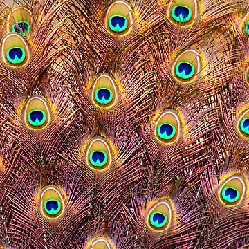Feathers of a peacock tail by PhotoStock-Isra