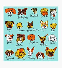20 Dog Breeds Photographic Print